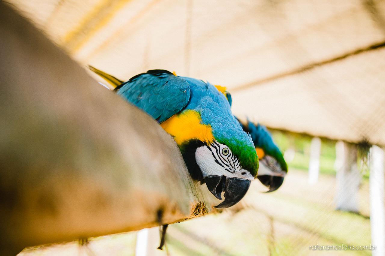 ensaio-de-casal-em-iguape-fotografo-de-casamento-ilha-comprida-casamento-fotografo-em-registro-sp-ensaio-na-fazenda-ensaio-no-sitio-00003